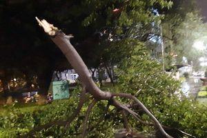 Cận cảnh bão số 5 giật cấp 12 đổ bộ vào Bình Định
