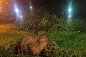 Cây cối đổ la liệt khắp các tuyến đường vùng tâm bão Quy Nhơn