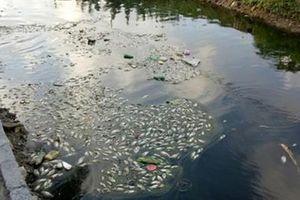 Hải Phòng: Nguồn nước phục vụ sản xuất nước sạch ngày càng ô nhiễm