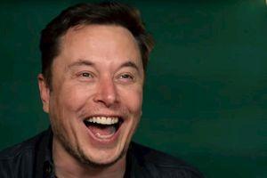 Elon Musk đổi tên trên Twitter thành 'Treelon', nguyên nhân phía sau thật sự bất ngờ
