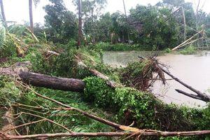 Quảng Ngãi: 12 người bị thương và 1 người mất tích sau cơn bão số 5