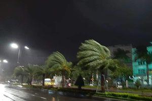 Tâm bão số 5: Cây cối đổ la liệt khắp các tuyến đường ở Quy Nhơn