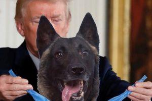 Tổng thống Mỹ Donald Trump đăng ảnh trao huân chương cho chó nghiệp vụ giúp tiêu diệt thủ lĩnh IS