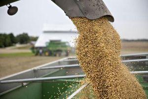 Trung Quốc nhượng bộ bằng cách bỏ thuế đánh vào nông sản Mỹ?