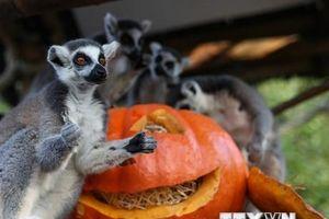 Những hình ảnh tưng bừng chào đón lễ hội Halloween trên khắp thế giới