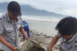 Sau bão số 5, bãi biển TP.Đà Nẵng ngập trong rác