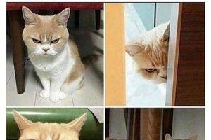 'Chết cười' với loạt ảnh động vật thể hiện cảm xúc