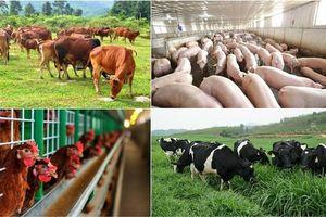 Kim ngạch xuất khẩu của ngành chăn nuôi năm nay có thể đạt 1,2 tỷ USD