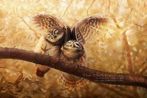 Những hình ảnh hiếm lạ đẹp tuyệt mỹ về loài cú