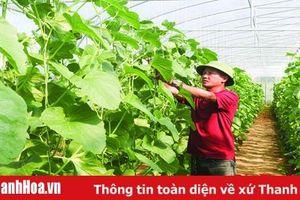 Huyện Hoằng Hóa chuyển đổi được 760 ha đất trồng lúa hiệu quả kinh tế thấp