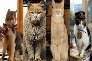 4 'hoàng thượng mèo' quyền lực nhất hành tinh