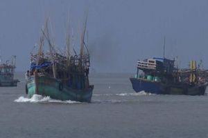 Tàu lớn tranh chấp ngư trường, gây mất an ninh trật tự vùng biển Cà Mau