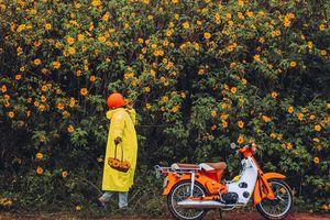Bất chấp trời mưa, chàng photographer cho ra đời bộ ảnh chụp cùng hoa dã quỳ với concept có 1-0-2 khiến dân tình bấn loạn
