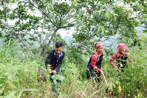 Phát triển kinh tế gắn với bảo vệ rừng