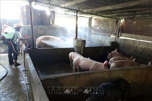 Kiểm soát, ngăn chặn dịch tả lợn châu Phi bùng phát