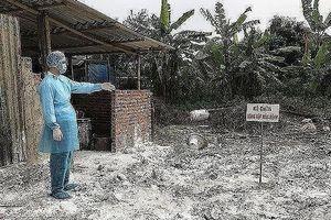Hà Nội: 247 xã, phường và 5 quận đã qua 30 ngày không phát sinh lợn mắc bệnh