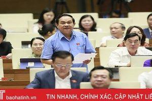 Đại biểu Quốc hội Hà Tĩnh chất vấn các biện pháp phòng chống dịch tả lợn châu Phi