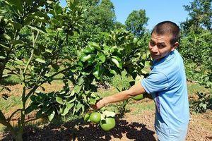 Đào tạo nghề cho lao động nông thôn: Gắn với sản xuất theo chuỗi giá trị