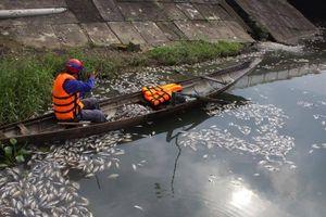 Cá chết nổi trắng mặt hồ ở Quảng Trị