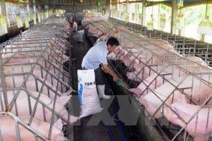 Liên kết chuỗi giá trị cho Đồng bằng Sông Cửu Long