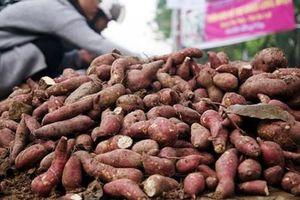 'Tư lệnh' đăng đàn nêu giải pháp 'cứu' nông sản