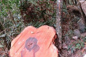 Vụ phá rừng tại VQG Phong Nha - Kẻ Bàng: Tạm giam trạm trưởng trạm kiểm lâm 4 tháng