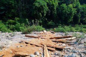 Quảng Trị: Công an vào cuộc vụ Trưởng phòng quản lý bảo vệ rừng bị hành hung