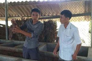 Phú Thọ: Thu nhập ổn định nhờ nghề nuôi dúi