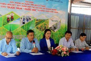 Tọa đàm đầu bờ hỗ trợ nông dân nâng cao hiệu quả sản xuất lúa