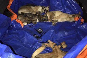Nhóm trộm chó ở Bình Dương hối lộ công an 15 triệu bất thành