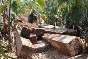 Khởi tố nguyên trạm trưởng kiểm lâm để rừng di sản bị phá