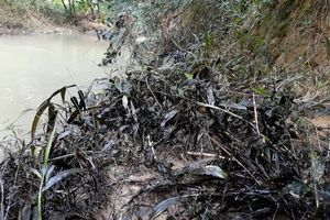Lại phát hiện dầu thải bị đổ trộm