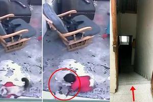 Clip: Thấy em bé sắp ngã xuống cầu thang, mèo nhanh trí lao ra giải cứu trong gang tấc