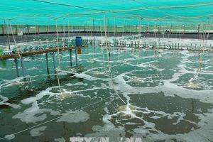 Bạc Liêu tăng cường kiểm soát ô nhiễm nguồn nước vùng nuôi tôm