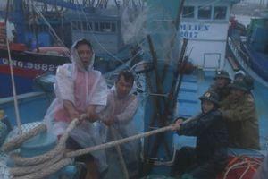 Hơn 300 tàu trú bão số 6 ở cảng cá Sa Huỳnh