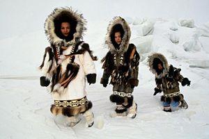 Cuộc phiêu lưu kỳ diệu của Julie và bầy sói hoang nơi Bắc Cực băng giá
