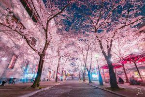 Vẻ đẹp 4 mùa hút hồn du khách ở Nhật Bản