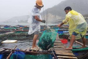 Bất chấp mưa gió, người dân Phú Yên đưa cá tôm đi 'chạy' bão