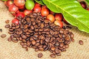 Giá cà phê hôm nay 10/11: Cuối tuần đi ngang