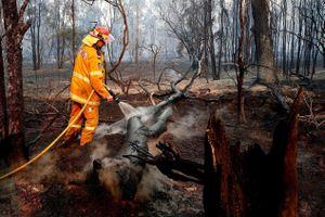 Cháy rừng lớn kỷ lục ở Australia, khói bay sang cả New Zealand