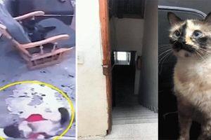 Chú mèo thông minh cứu em bé thoát cú ngã cầu thang