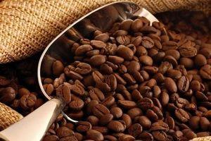 Giá cà phê hôm nay 11/11: Cao nhất ở mức 37.000 đồng/kg
