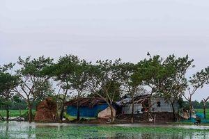 Bão Bulbul càn quét Ấn Độ và Bangladesh khiến ít nhất 20 người chết