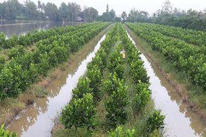 Chuyển đổi 12.593ha trồng cây ăn trái giá trị cao