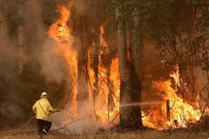 Cháy rừng ở Úc: Quá muộn để di tản, người dân tìm chỗ trú ẩn