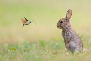 Độc đáo bướm cổ tích ghé thăm vương quốc động vật