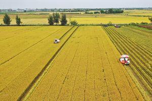 Đổi mới đưa nông nghiệp Việt Nam phát triển vượt bậc