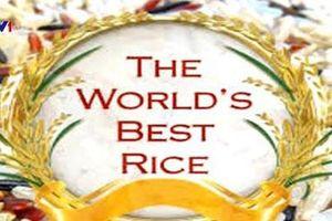 Lần đầu tiên gạo Việt Nam đoạt giải 'Gạo ngon nhất thế giới'
