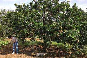 Đồng Nai phát huy thế mạnh trồng cây ăn trái