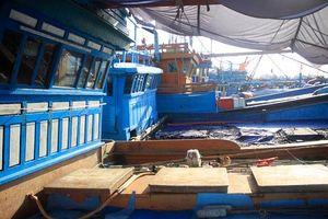 Quảng Ngãi: Cảng neo trú quá tải, tàu bí đường ra